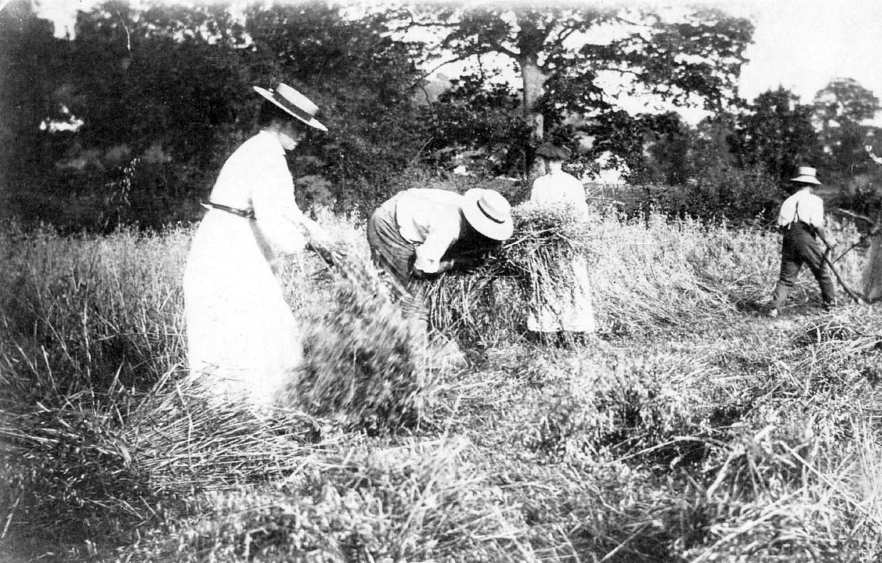 Gardner family harvesting the corn and wheat in the 1920s