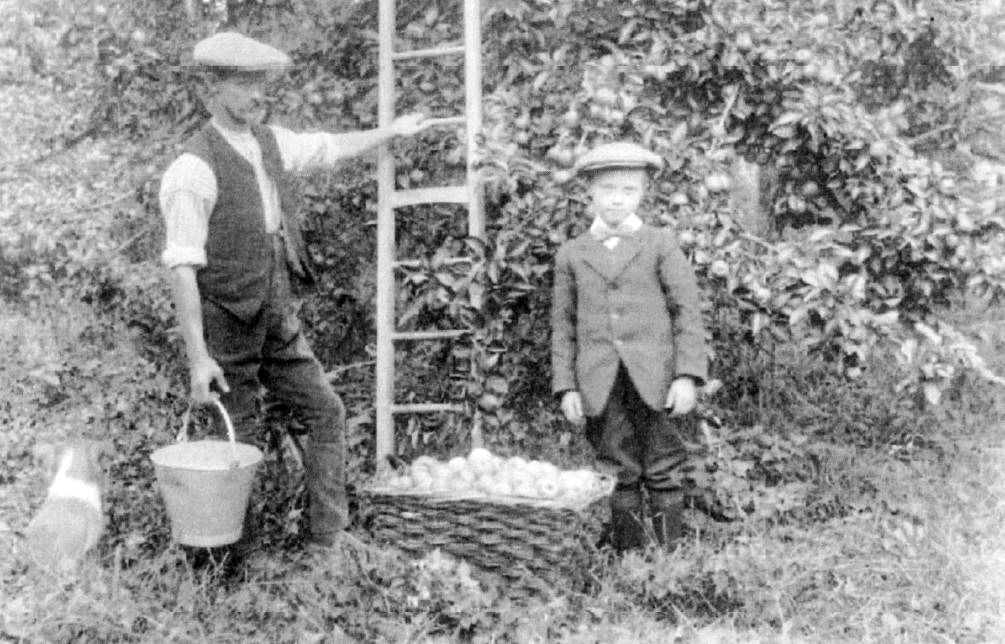 Rowley Mason and his father harvesting apples