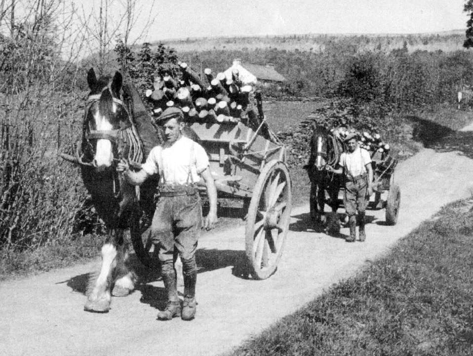 Tommy Thornburrow and John Gardner carting wood to Gregg Hall in 1940