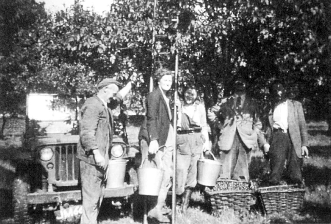 Picking damsons in Mr. Millard's orchard, Bob and May Armstrong