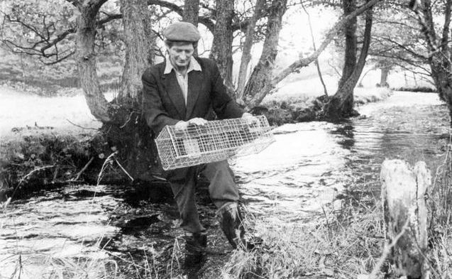Setting a mink trap on the River Gilpin <small>(Daily Express)</small>
