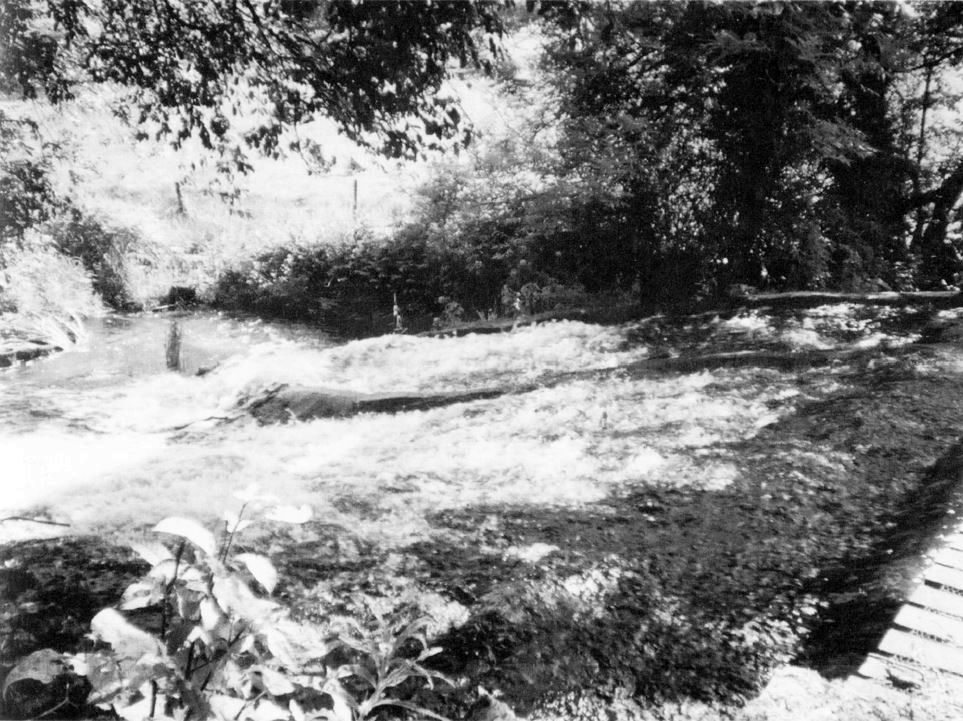 Crosthwaite Mill weir, where the sea lamprey was caught