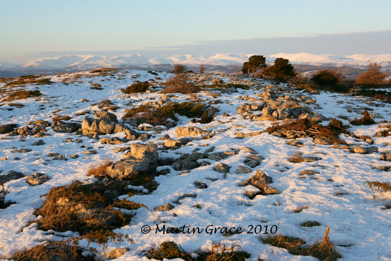 Lord's Seat, Whitbarrow Fell, January 3 2010 R 013EL